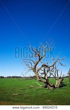Grass field with bizarre dead tree
