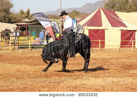 Armand The Singing Cowboy On His Black Stallion Taking Bow