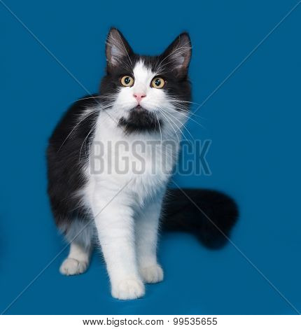 Fluffy Black And White Cat Sitting On Blue