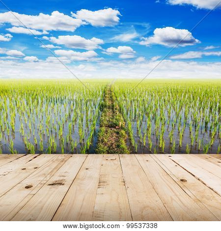 Wood Tabletop And Field Rice With Blue Sky Clouds