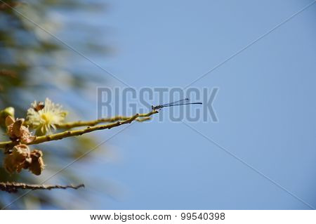 dragonfly pin on tree branch