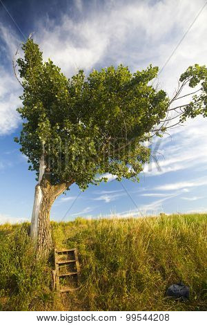 Summer rural landscape with heart shaped tree