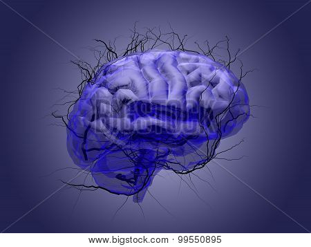Brain Root Concept Of A Root Growing In The Shape Of A Human Brain.