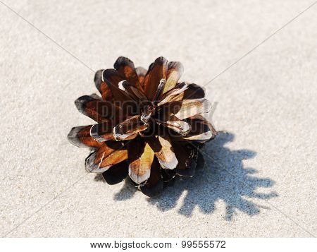 pinecone on a sand background