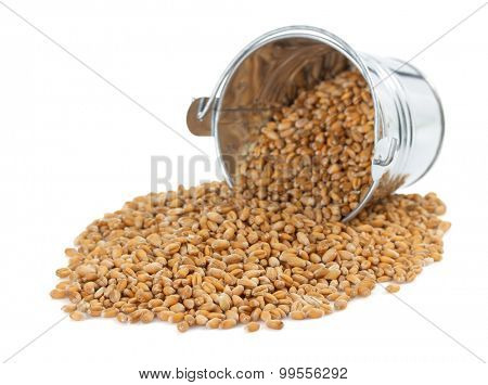 wheat grain in bucket isolated on white background