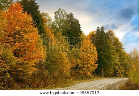 colored autumn forest under sky
