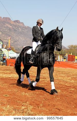 Young Girl Riding Lovely Black Friesian Horse.