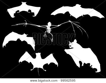 illustration with bat collection isolated on black background