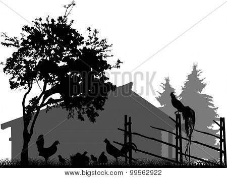 illustration with poultry near fence isolated on white background