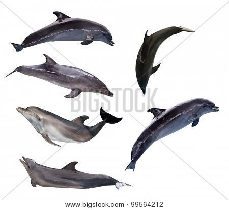 six grey dolphins isolated on white background