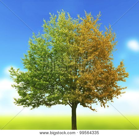 One tree with green and yellow leaves on nature blured background