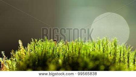 Tiny Mushroom Hidden In Moss