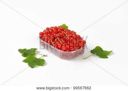 plastic tray with freshly picked red currant