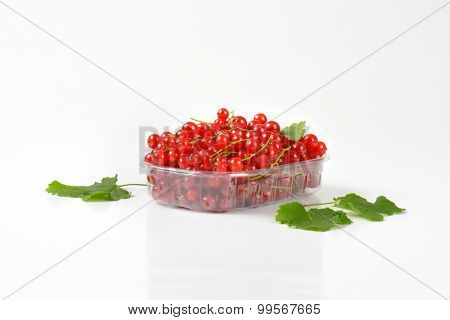 weighed portion of red currant in the plastic tray