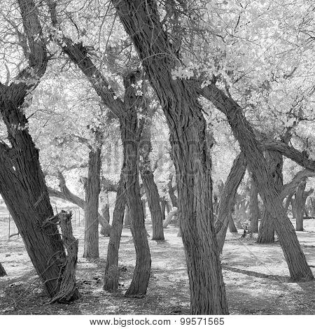 Black And White Image Of Trees In Autumn Season