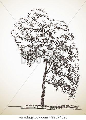 Tree. Vector sketch, Hand drawn illustration