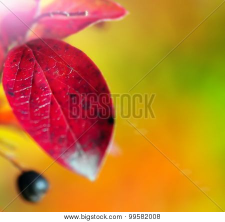 Abstract autumnal backgrounds with petzval bokeh and lens flare