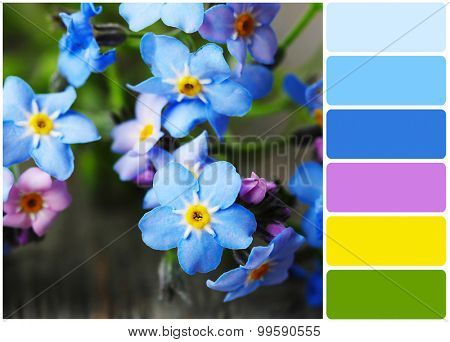 Forget-me-nots flowers and palette of colors
