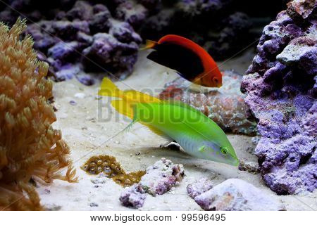 Marine Tropical Aquarium With Colorful Fishes.