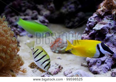 Marine Tropical Aquarium With Colorful Fishes