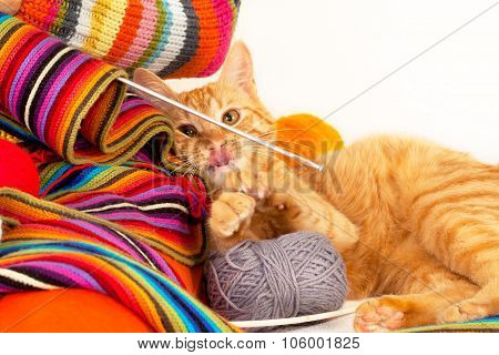 Cat playing with clew and knitting needle