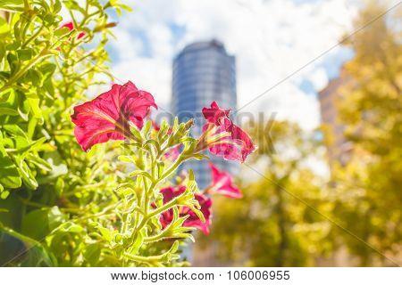 Flowering City