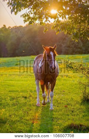 Horse Animal Posing On A Farmland At Sunset