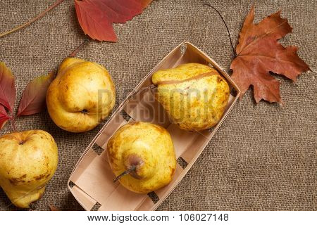 Yellow Pears On A Sackcloth