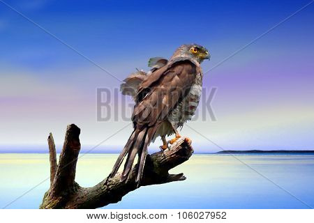 Painting Of An Eagle On Dead Tree At Beach
