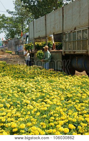 Asian Farmer Harvest, Flower, Trader Transport