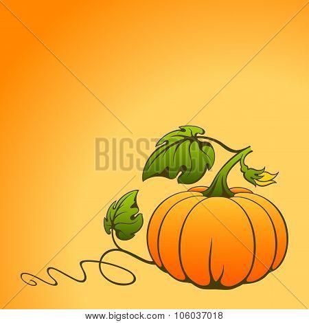 Vector Pumpkin.