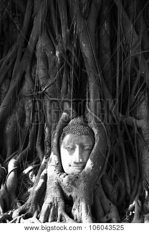 Head In Tree At Ayutthaya,thailand