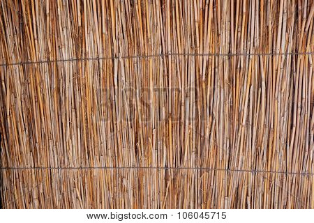 Brown wattled background