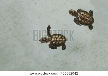 Sea Turtle Underwater Sick Small Little Nature Concept