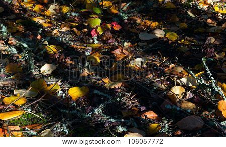 Shadows On Fall Forest Floor