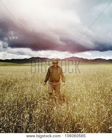 Man Walking Cornfield In A Beautiful Scenic View Concept