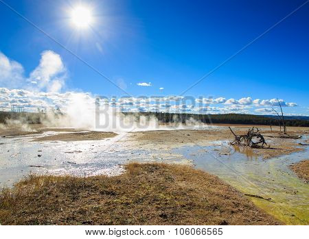 Geyser Yellowstone.