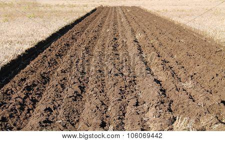 Farming Field.