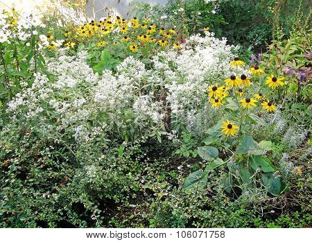 Flowerbed with white and yellow flowers