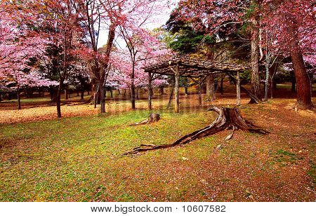 Primitive Hut Under Cherry Blossom