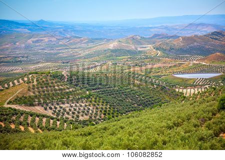 Panoramic view of Olive Trees Plantation, Beautiful Andalusian landscape, Spain, Europe