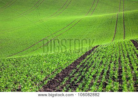 Pastoral green field in beautiful hills, abstract nature background