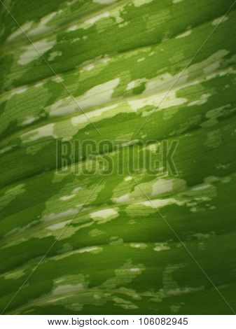 Green closeup leaf