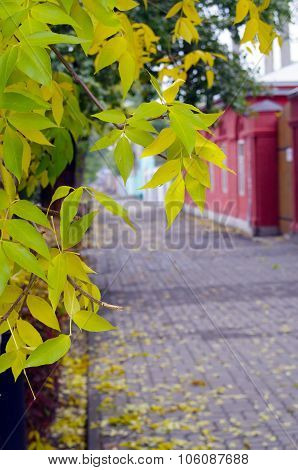 Ash Branches With Yellow Leaves And Pavement Tiles