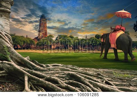 Big Root Of Banyan Tree And Kingdom Elephant Dressing Against Land Scape Of Ancient And Old  Pagoda