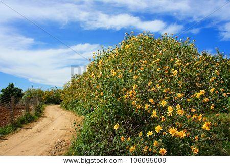 Dalat Countryside, Da Quy Flower