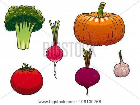Fresh and ripe farm vegetables