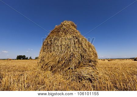 haystacks straw .  harvesting