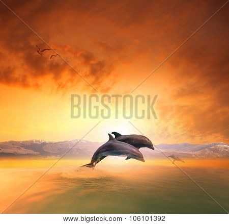 Couples Of Sea Dophin Jumping Through Ocean Wave Floating Mid Air Against Beautiful Sun Set Sky