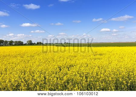 Agricultural field . summer
